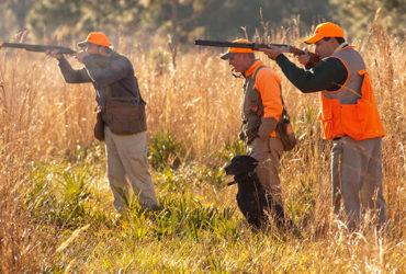 quail hunting Texas